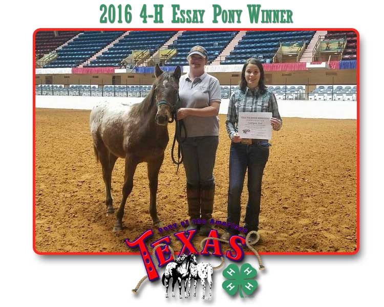 Welcome to Texas Pony of the Americas